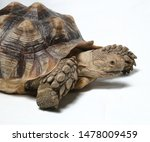 Stock photo african spurred tortoise also know as african spur thigh tortoise geochelone sulcata isolated on 1478009459