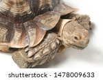 Stock photo african spurred tortoise also know as african spur thigh tortoise geochelone sulcata isolated on 1478009633