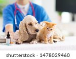 Stock photo vet examining dog and cat puppy and kitten at veterinarian doctor animal clinic pet check up and 1478029460