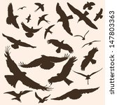vector silhouettes of birds ... | Shutterstock .eps vector #147803363