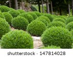 Boxwood    Green Garden Balls...
