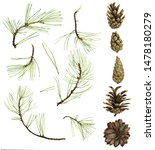 pine cones and green branches...   Shutterstock . vector #1478180279