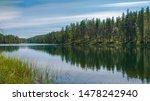 Finland summer Rokua forest landscape