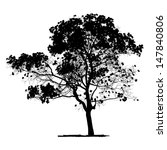 Vector Drawing Of The Tree  ...