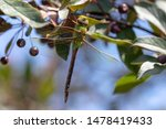 Stock photo dragonflies perched on the branch tree and flowers 1478419433