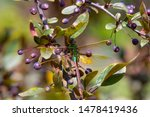 Stock photo dragonflies perched on the branch tree and flowers 1478419436