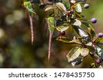 Stock photo dragonflies perched on the branch tree and flowers 1478435750
