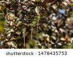 Stock photo dragonflies perched on the branch tree and flowers 1478435753
