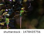 Stock photo dragonflies perched on the branch tree and flowers 1478435756