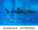 25 7  2019   Whale Sharks...