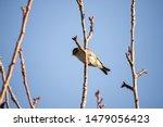Small bird on tree branch, birds on perch, wild bird perched, silvereye bird, waxeye in New Zealand, Zosterops lateralis, ornithology background
