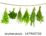 set of spice herbs     isolated ... | Shutterstock . vector #147905720