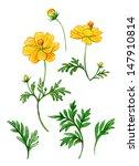 watercolor yellow kosmeya | Shutterstock . vector #147910814