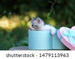 Stock photo cute little kitten in a gift box cute kitten in nature 1479113963