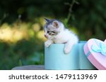 Stock photo cute little kitten in a gift box cute kitten in nature 1479113969