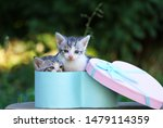 Stock photo two cute kittens in a gift box cute kittens in nature 1479114359