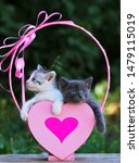 Stock photo two cute kittens in a gift box cute kittens in nature a pink heart shaped box 1479115019