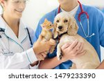Stock photo vet examining dog and cat puppy and kitten at veterinarian doctor animal clinic pet check up and 1479233390