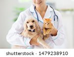 Stock photo vet examining dog and cat puppy and kitten at veterinarian doctor animal clinic pet check up and 1479238910