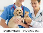 Stock photo vet examining dog and cat puppy and kitten at veterinarian doctor animal clinic pet check up and 1479239153