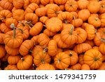 Fresh Healthy Bio Pumpkins On...