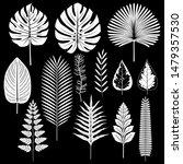 tropical leaf silhouette set... | Shutterstock .eps vector #1479357530