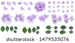 Purple Hydrangea Flowers...