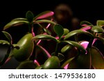 Stock photo blurry bigfoot peaking through plant life against a dark background with colored gels 1479536180