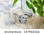 green leaves with reflection in ... | Shutterstock . vector #147960266
