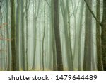 Dense fog in the autumn forest and tree trunks - stock photo