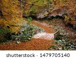 Beautiful Autumn Views Of...