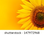Closeup Of Sunflower With...