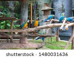 macaws are considered to be the ...   Shutterstock . vector #1480031636