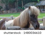 miniature horse are another...   Shutterstock . vector #1480036610