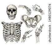 hand drawn anatomy set. vector... | Shutterstock .eps vector #1480129076