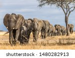 Herd Of Elephants In Africa...