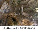 Elephant Shaped Limestone...