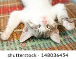 Stock photo small kitten sleeping on the bench 148036454