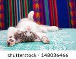 Stock photo small kitten sleeping on the bed 148036466
