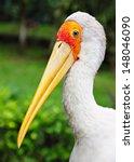 Yellow Billed Stork In Kuala...