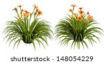 day lily | Shutterstock . vector #148054229