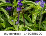 Stock photo dragonflies perched on the branch tree and flowers 1480558100