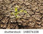Drought Land  Plant Struggling...