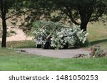 A Golf Cart Hauls Away Tree...
