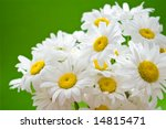 bouquet of daisies on green background - stock photo