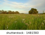 the countryside of northern... | Shutterstock . vector #1481583