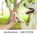 Stock photo give me five dog pressing his paw against a woman hand 148172258
