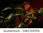 Stock photo blurry bigfoot peaking through plant life against a dark background with colored gels 1481769593