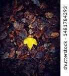A Single Yellow Leaf Sitting...