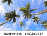 Big Tropical Palm Tree Against...